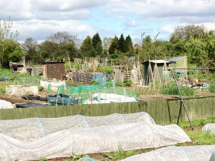 Callowland Allotments