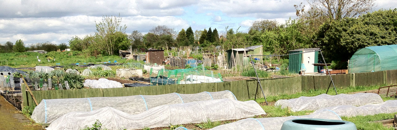 Image of Callowland Allotments